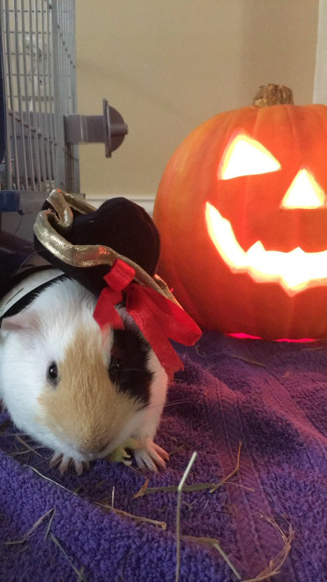 The Best Cats and Dogs Halloween Costumes(+Bonus for other pets)