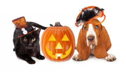 Content pets dog cat halloween  sc 1 st  AllTopReviews.com & The Best Cats and Dogs Halloween Costumes(+Bonus for other pets)
