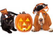 Slide pets dog cat halloween